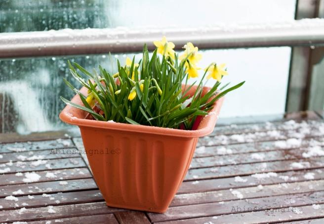 pavasario4