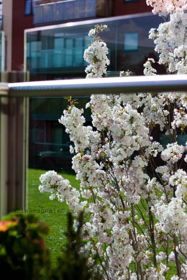 pavasariszydi2